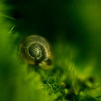 Little Snail . IV by Somebody--else