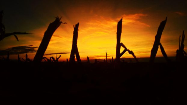 Sunset on a harvested cornfield by Redstone--Army