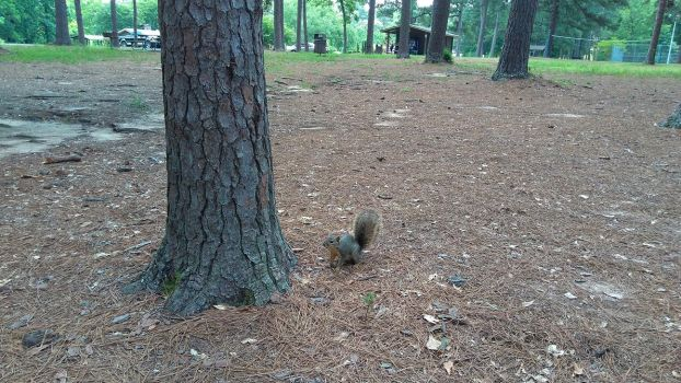 Curious Squirrely by BLUEamnesiac