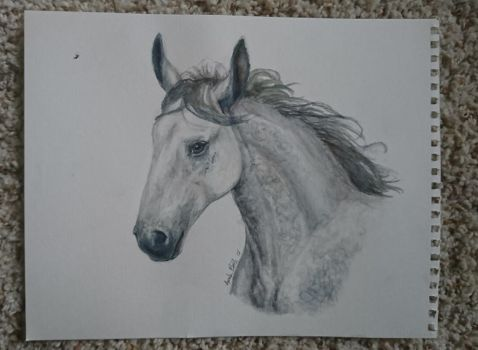 Dappled gray watercolor horse by QueenAnneka
