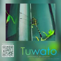 Tuwato by Giro54