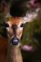 Deer by ThreeWillows