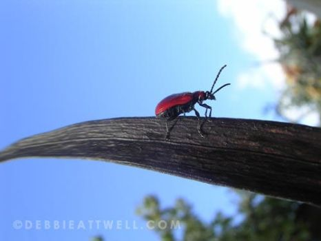 Mr Bug's Big Mission by debbieattwell