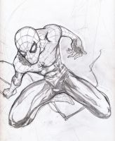 Spidey warm-up by grover80