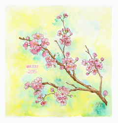 :: Cherry Blossoms (1) :: by maritery-san