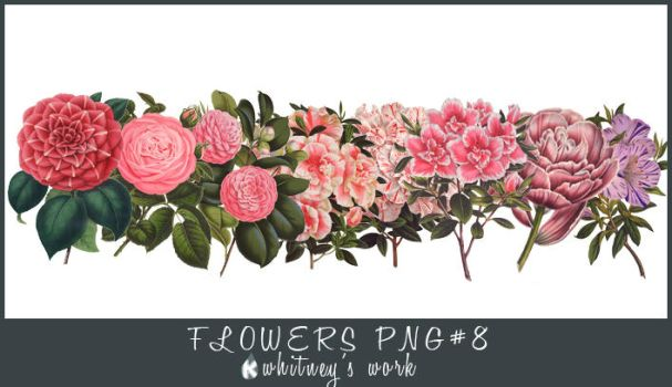 Flower PNG by Kmhwhitney