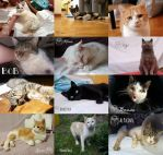 WE ARE NOT GIVING UP-PLEASE HELP OUR CATS!!! by Actlikenaturedoes
