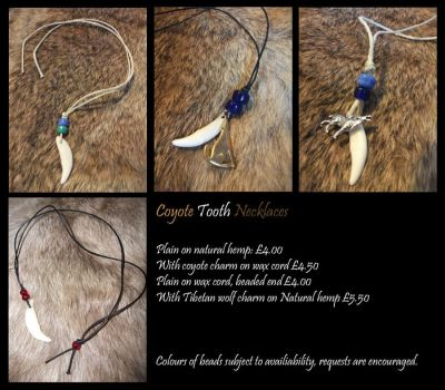 Coyote tooth necklaces by neon-possum