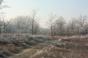 Winter in the Kiskunsag by Galendae