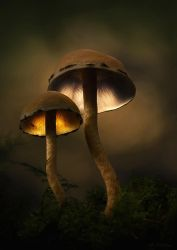 Magic Mushrooms by PfisterMartin