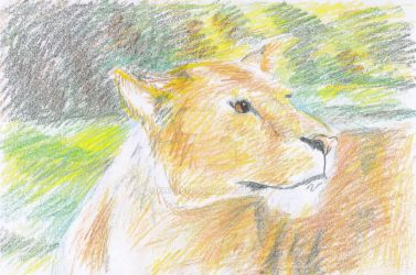 Lioness by emilybee