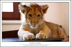 Just cute by AF--Photography