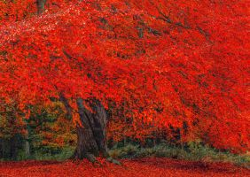 Hulne Park Autumn by newcastlemale