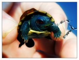Real Squirtle