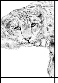 snow leopard by last-trace
