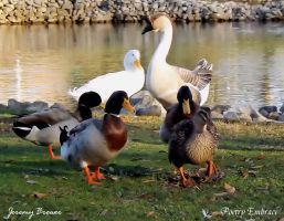 Duck gang by PoetryEmbrace