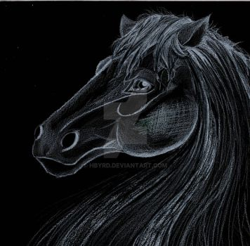 BW Drawing of a Horse by Hbyrd