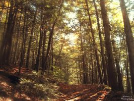 Green Mountain Forest. by Sparkle-Photography