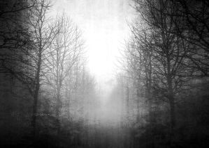 Foggy Pathway lined with trees in black and white by AStoKo