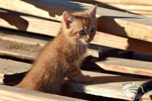 Kitten in a Woodpile by TaksArtPhotos