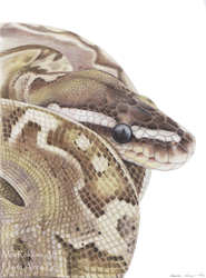 Bamboo Ball Python by Gray-Ghost-Creations