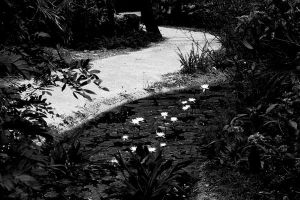 The garden path by tjohare