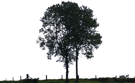 tree 23 png by gd08