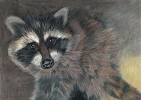 Raccoon by niferdil