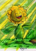 Let the sun shine in Sunflora