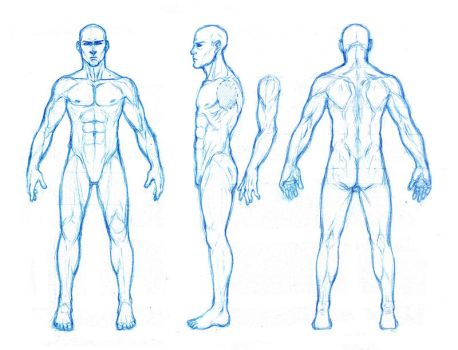 male anatomy orthographics by dathron