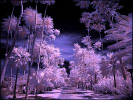 Tropical Garden IV infrared by MichiLauke
