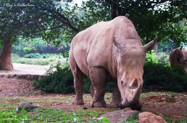 White Rhino by RoyWicaksono