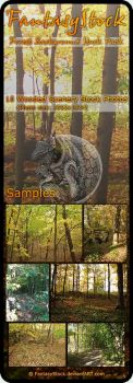 Forest Backgrounds Zip Pack 2 by FantasyStock