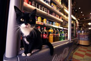 What Drink Do You Want? by V-E-S-S-I-E-L