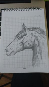 Sketch of A Horse by kuleli5153