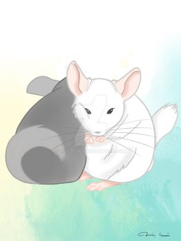 Chinchilla couple by Tipsutora