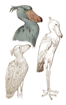 Shoebill by Drkav