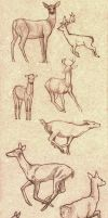 Deer poses study by Nimphradora