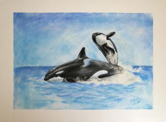 Killer Whales by VeruveeH