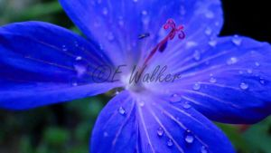 Droplets by LittleMissMischief