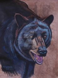 Michael The Handsome Black Bear  by HouseofChabrier
