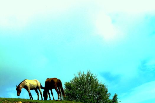 Wild horses on the air by GreenPasserby