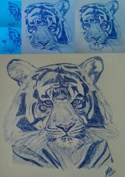 Tiger - step by step - only blue pen by LoiseFenollCreation