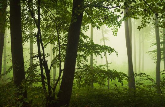 Rain Forest by aw-landscapes