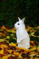 Moppel And The Leaves by ShareTheMoment