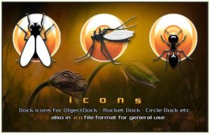 Insects by adni18
