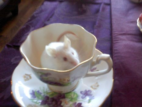 Tea Cup Explorer by LadyVictorian