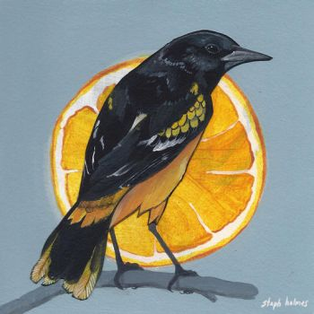 Baltimore Oriole by StephHolmes