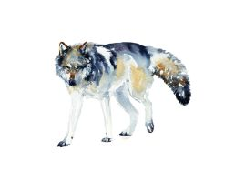 Alpha by SALTWatercolors