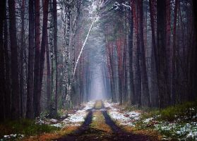 December Forest by Justine1985